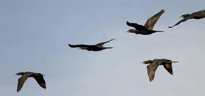 Simbología de las aves