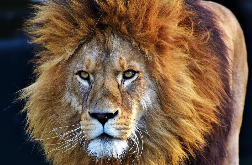 Simbología del león